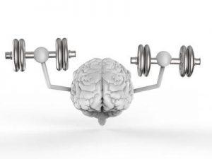 Formation des cerveaux